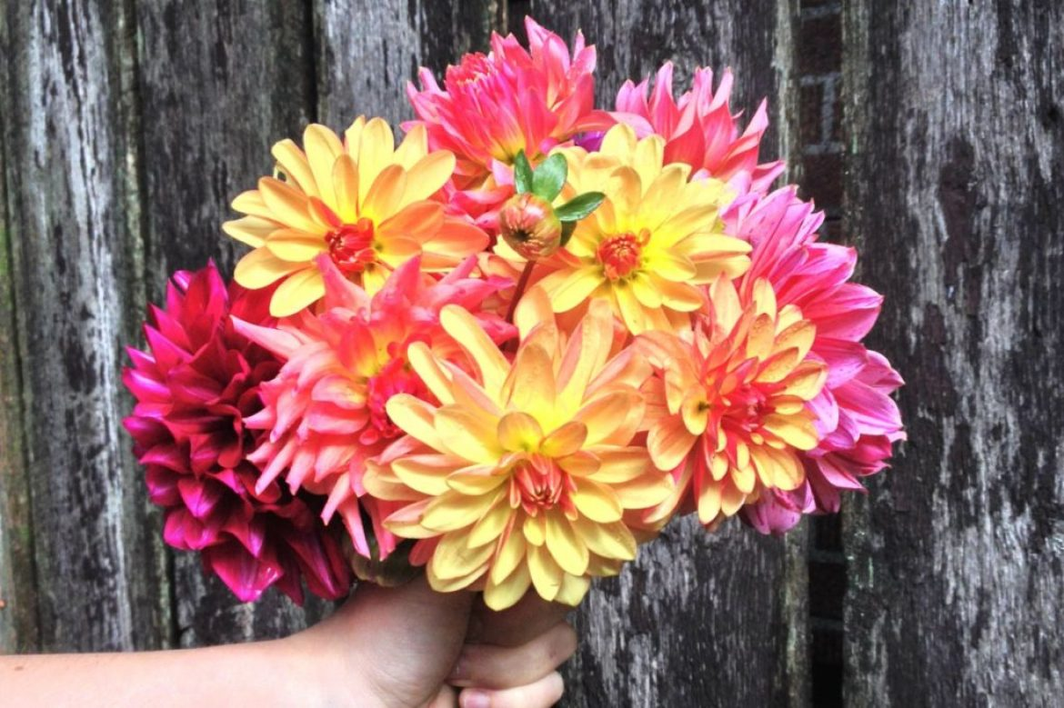 Mother's Day Giveaway: Free Local Flowers All Summer